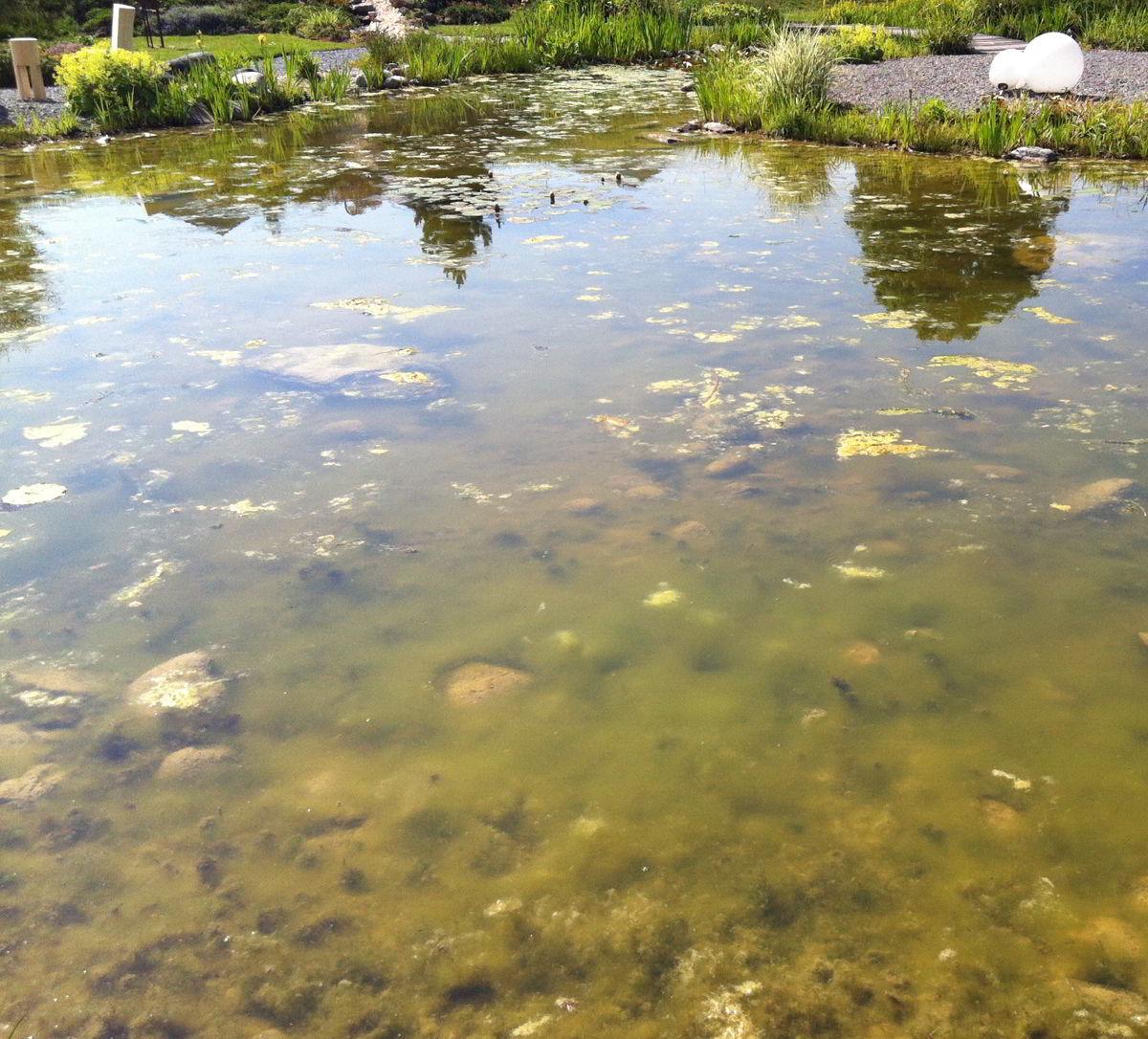 Contrôle des algues naturelles | mit effektiven Klicktönen ohne ...