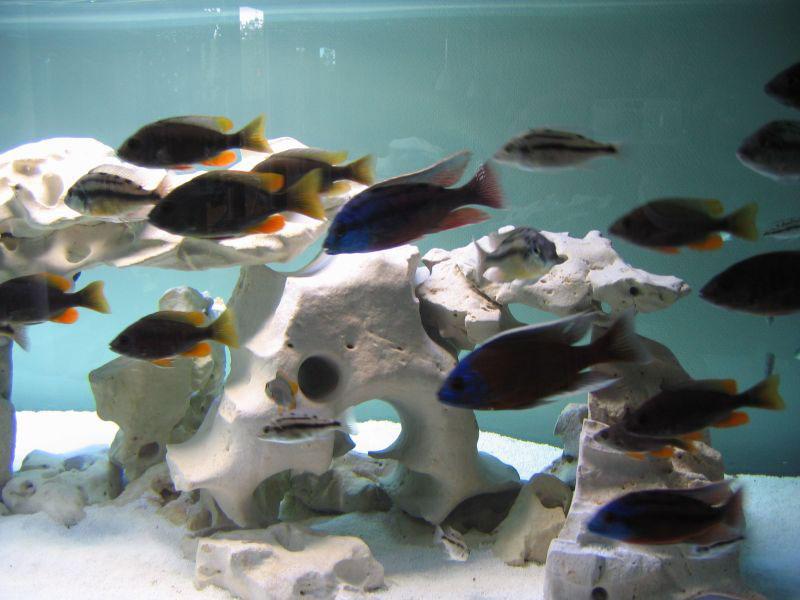 aquarium algenfrei