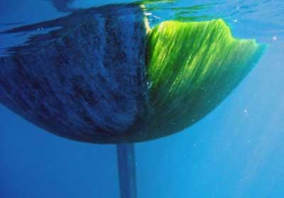 Ship's hull from neighbor was also algae-free
