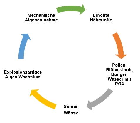 Teufelskreis: zuviele Nährstoffe im Wasser = Algen